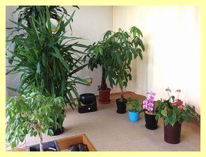 入り口の植物